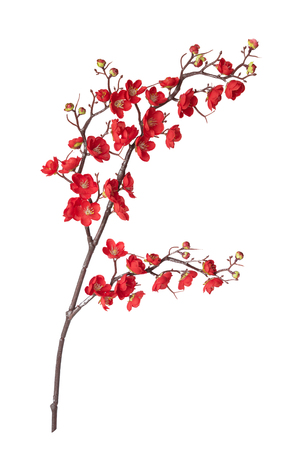 Artificial branch of blossoming cherry with bright red flowers, isolated on white background