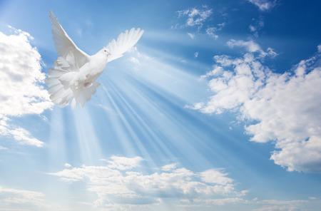 Vliegende witte duif en felle zonnestralen op de achtergrond van blauwe lucht met pluizige lichte witte wolken Stockfoto