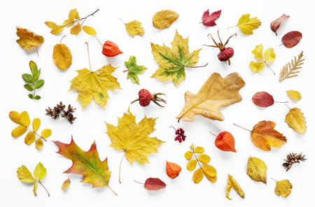 Colorful and bright background of fallen autumn leaves on white