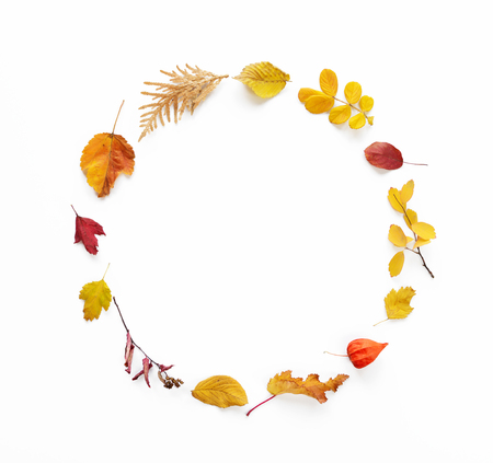 Colorful and bright round frame of fallen autumn leaves on white  background