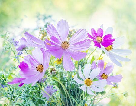 Prachtig veelkleurig boeket van wilde bloemen op een onscherpe natuurlijke achtergrond Stockfoto