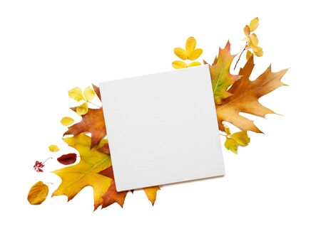 Autumn composition with white blank square sheet of paper with copy-space and multicolored fallen leaves isolated on white background