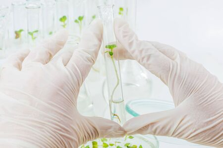 Two hands in white rubber glove holding a glass test-tube with cloned plant closeup Zdjęcie Seryjne - 124742830