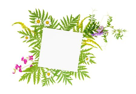 Scrap booking page of wedding or family photo album, frame with fresh branches, green leaves, herbs, chamomile, vetch and other multicolored wildflowers isolated on a white background; top view, flat lay, overhead view