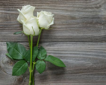 Beautiful bouquet of three elegant white roses on a long stems with green leaves on an old gray wooden background