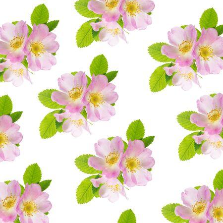 Trzy delikatne różowe kwiaty dzikiej róży z zielonymi liśćmi na białym tle jako jednolity wzór
