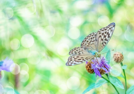 Green natural background with the big butterfly on a flower and beautiful bokeh