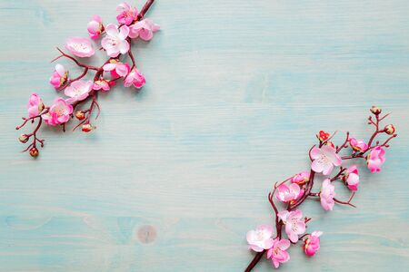 Abstract spring background of painted blue board with two flowering cherry branches covered with pink flowers