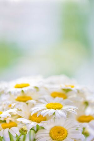 Bouquet of daisies covered with drops of morning dew on a natural background, with copy-space