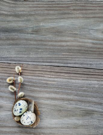 Two spotted quail eggs in a small nest and fluffy willow twigs on the background of the old wooden boards, with copy-space 写真素材
