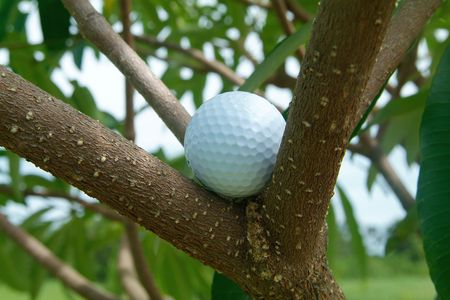 Golf ball caught among the branches of a tree