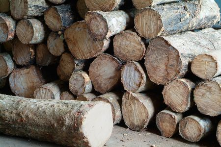 Logs of rubber tree