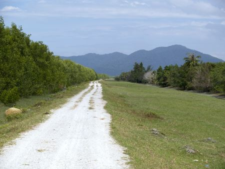 dirtroad: Road disappearing in the forest with mountains in the background