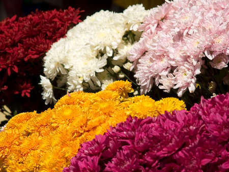 Colourful flowers at a market. Shallow depth of field with yellow and pink flowers in focus. photo