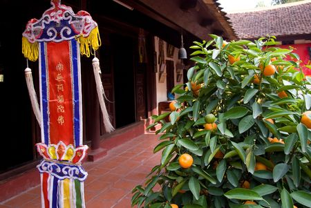 tran: Orange tree and religious pennant at Tran Quoc Pagoda in Hanoi, Vietnam.