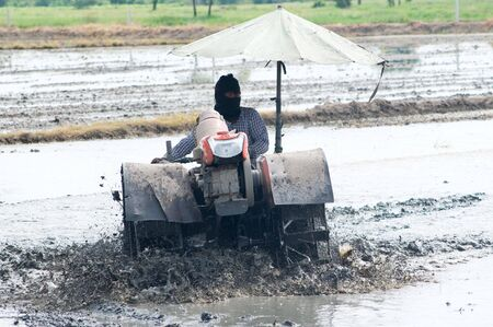 Farmer in Ang Thong, Thailand preparing the paddy field before planting rice. photo