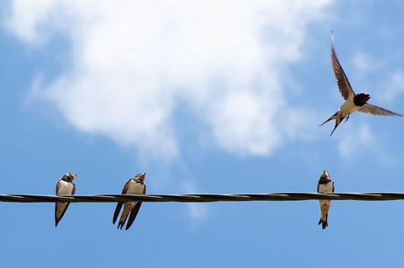 Three swallows on a wire and one taking off Stock Photo