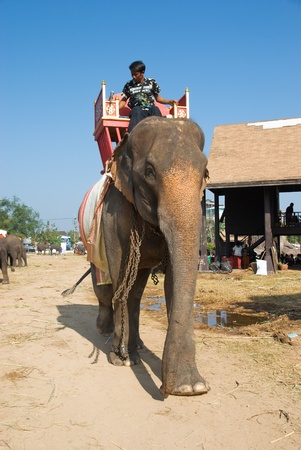 mahout: SURIN - NOVEMBER 21: Large Asian elephant with saddle walking during The Annual Elephant Roundup on November 21, 2010 in Surin, Thailand. Editorial