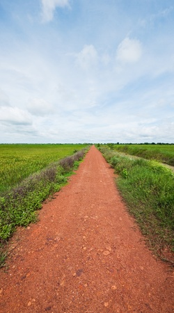 Dirt road through the rice fields in Sisophon, Cambodia Stock Photo - 10868812