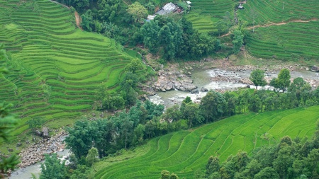 Rice terraces and river in Sapa Valley, North Vietnam photo