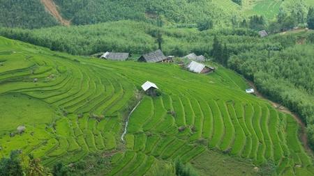Farm buildings and rice terraces in Sapa, Vietnam photo