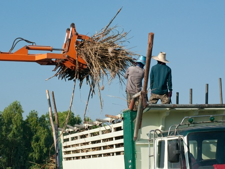 Sugarcane being loaded onto a truck at a farm in Isan, Northeastern Thailand.