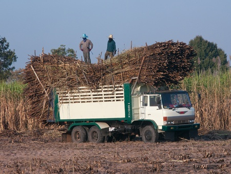 Truck loaded with sugarcane on a sugarcane field in Isan, Northeastern Thailand.
