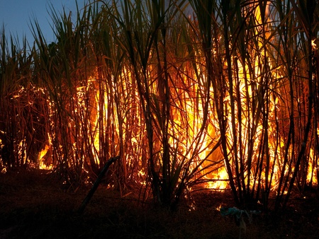 Sugarcane field in Nakhon Ratchasima, Thailand set on fire to make harvesting faster. The burning is often done at night to better control the fire.