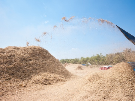 threshing: Threshing of rice in Sisophon, Banteay Meanchey Province, Cambodia, using a mechanical thresher with hay flying through the air.
