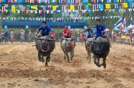 PATTAYA - AUGUST 17: Participant at the Buffalo Racing Festival of Nong Prue City at Mab Prachan Reservoir in Pattaya, Thailand on August 17, 2014.
