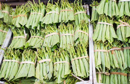 Betel leaves at a market in Myeik, Myanmar. Betel leaves and nuts are mild, addictive drugs widely used in South and Southeast Asia. The drug colours the teeth of the users red. They also have medical uses. Shallow depth of field photo with the first row