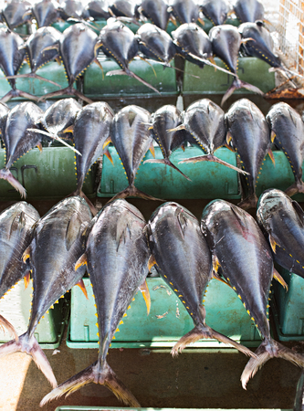 city fish market: Yellow fin tuna at the fish market in General Santos City The Philippines. Shallow depth of field with the first row of tuna in focus.