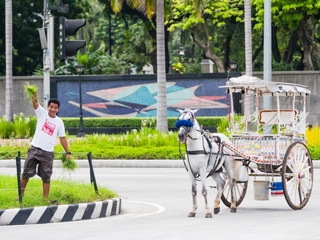 median: Manila - August 9, 2017: Coachman finding food for his horse at the central reservation of Roxas Boulevard in Manila.