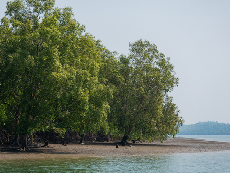 Mangrove forest on Kadan Kyun, previously King Island, the biggest island of the Myeik Archipelago, formerly the Mergui Archipelago, in the Tanintharyi Region of Myanmar.
