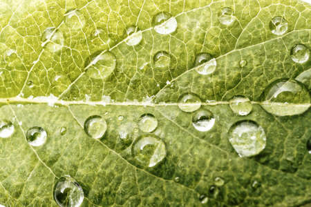 green leaf with drops of water. backgound Stock Photo
