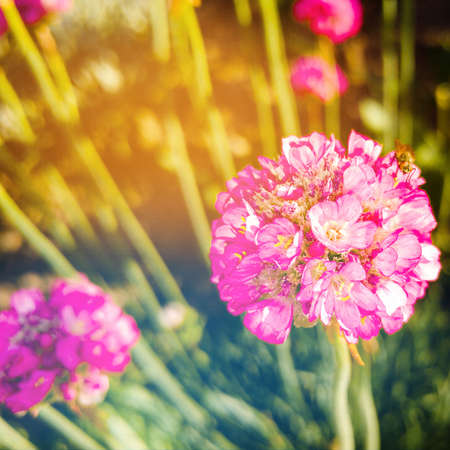 Spring small flowers on blurred background. Spring or summer border template with copy space. Romantic greeting card. Blooming flowers on sunny day. Beautiful flowering springtime. Stock Photo