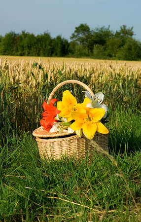 gramineous: Picnic basket with bunch of flowers near the golden wheat field