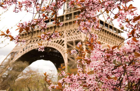 Spring in Paris. Bloomy cherry tree and the Eiffel Tower. Focus on flowers Banco de Imagens
