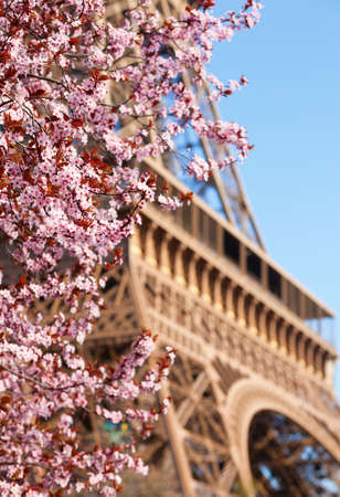 Spring in Paris. Blossoming cherry tree and Eiffel tower. Focus on flowers photo