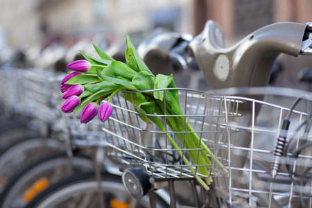 Spring is coming! Bunch of tulips in basket of Parisian public bike for rent photo