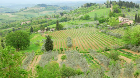 Typical Tuscan landscape with vineyards and farms photo