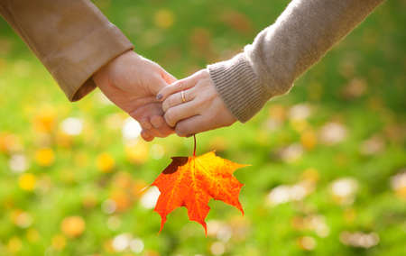 Male and female hands holding a red maple leaf Stock Photo
