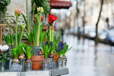 Outdoor flower shop in Paris Stock Photo - 17756533
