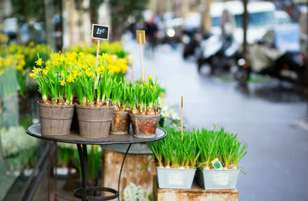 Outdoor flower market on a Parisian street photo