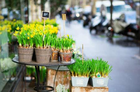 Outdoor flower market on a Parisian street Stock Photo - 17756531