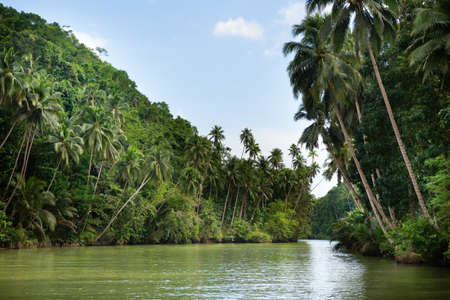 shores: Tropical river with palm trees on both shores