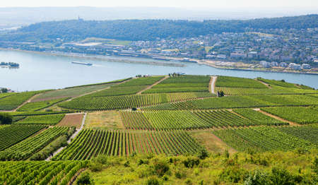 rudesheim: Wineyards in Rudesheim am Rhein