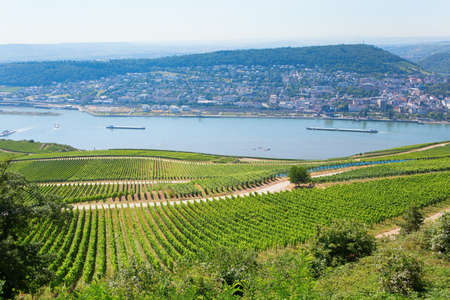 wineyard: Wineyards in Rudesheim am Rhein
