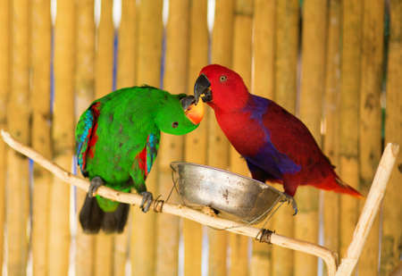 the two parrots: Two parrots on a branch