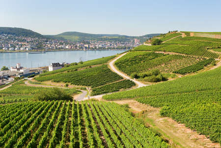 Vineyards in Rudesheim am Rhein photo